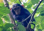 2 DAYS CHIMPANZEE TREKKING WITH KIGALI CITY TOUR