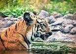 Sundarbans Excursion With Rocket Steamer