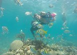 SNORKEL AND MANGROVES IN CARTAGENA, ONE HOUR OPEN BAR AND LUNCH