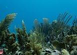 Snorkel Tour - Cenote & Reef