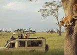 10 days: Follow the Migration (Kenya & Tanzania )