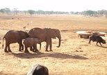 Amboseli National Park Full Day Tour from Nairobi