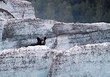 Bears, Trains & Icebergs Tour