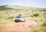 03 Days Kenya Budget Camping Group Safari to Maasai Mara