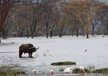 06 Days Best of Kenya Budget Safari 2018-19
