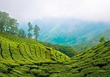 5 Days Kerala Private tour Package