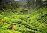 6Days Private Kerala Tour From Kochi