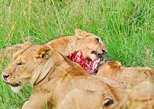 10-Day Tanzania's Southern Wildlife Circuit Mikumi,Selous Ruaha,Udzungwa