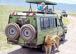 11 Days Kenya & Tanzania Private Wildlife Lodge Safari