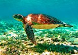 Mexico - Riviera Maya & the Yucatan: TULUM AND AKUMAL TO SWIMMING WITH TURTLES FROM PLAYA DEL CARMEN