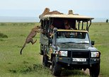 3 Days Ngutuni Saltlick Wildlife Safari