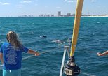 Dolphin Sightseeing Sail on The Privateer Catamaran