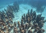 Dive and Experience MUSA & Reef for Certified Divers