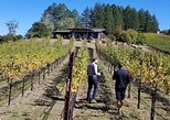 Exclusive Wine Tasting Tour - The Places You Won't Find On Your Own