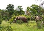 Africa & Mid East - Botswana: 2 Days Mokoro in Okavango Delta, Botswana