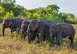 Private Tour: Udawalawe National Park Safari from Hikkaduwa