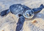 Kosgoda Sea Turtle Conservation Project Entry Ticket