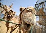 2-Hour Camel Safari Sunset with Bedouin Meal