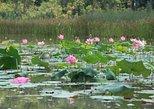 Lake Chini Tour