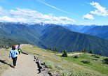 Hurricane Ridge Guided Tour in Olympic National Park