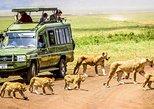 1 Day Trip to Ngorongoro Crater