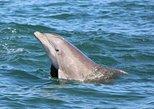 Dolphin and Wildlife Adventure