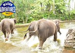 Beautiful Elephant Park at Mason Adventures with Lunch Private Day Tours