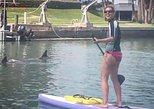 Guided Paddleboard Dolphin Tour