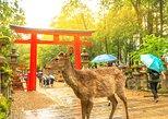 7 nights Japan Delight