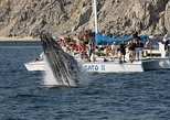 Whale Watching Tour in Los Cabos Aboard the Pez Gato