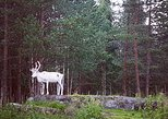 Autumn Visit to Santa Claus Village and Husky Farm from Rovaniemi