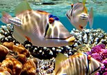 Africa & Mid East - Egypt: Snorkeling Trip to Utopia Island in Safaga from Luxor