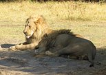Africa & Mid East - Botswana: 3 Days Central Kalahari Game Reserve, Botswana