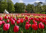 Shore Excursion: Keukenhof Gardens Tour from Amsterdam & Free 1-hr Canal Cruise