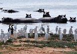 1 DAY LAKE NAIVASHA NATIONAL PARK WALKING WITH THE ANIMALS