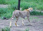 2 Days Safari to Lake Manyara & Ngorogoro Crater