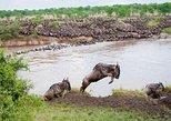 11 days Serengeti Migration Safari Tour Tanzania 8,390 USD