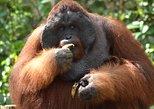 5 Days Truly Orangutan Wildlife Jungle Trail