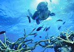 Mauritius South Tour Including Blue Bay Glass Bottom Boat & Snorkelling