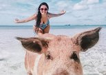 Private Flight and Boat Charter to Swimming Pigs from Nassau, Bahamas
