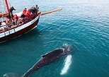Whale watching on board a Traditional Oak Sailing Ship from Husavik