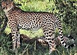 2 Days Tsavo East National Park Tour (1 Night)