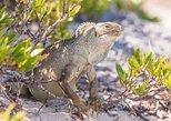 Hobie Cat Getaway Tour to Iguana Island