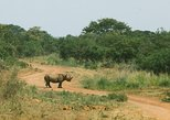 1 Day Full Akagera National Park Game Drive from Kigali