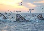 Boston Super Saver: Whale-Watching Cruise & New England Aquarium Admission