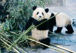 All Inclusive Amazing Xi'an Panda and City Highlights Private Day Tour