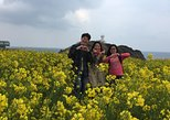 All-inclusive, full-day trip of Jeju island from Seogwipo city - East bound
