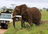 10days Best of Kenya Family Wildlife Safari Holiday
