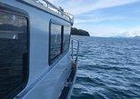 USA - Alaska: Whale Watching Experience