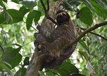 Sloth Adventure From Guanacaste